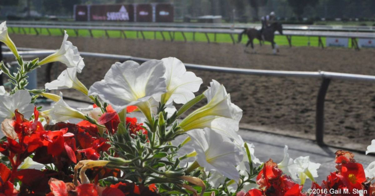 view of horse on a racetrack training