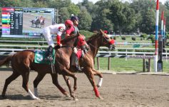 Enjoy the 78th Season of Harness Racing at the Saratoga