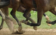 horse hoofs as they race on the track